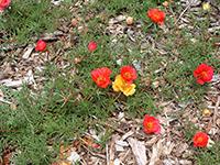 flowers_mls_-075_2