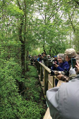 Birdwatching in Toledo May 2018