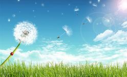 wind-carries-dandelion