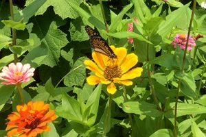 img_1556-monarch_mls